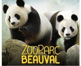 Groupon: Entrée adulte ou enfant pour le Zoo de Beauval à 21,50€ au lieu de 31€