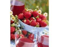 Willemse: 20 plants de fraisier Mara des bois faciles à planter à 9,99€ au lieu de 19,99€