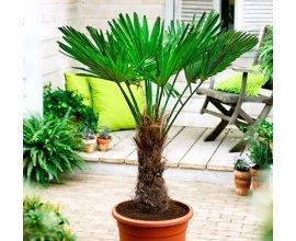 Bakker.com: 1 palmier exotique gratuit dès 25€ d'achat