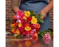 Aquarelle: Livraison du bouquet de roses Arlequin offerte