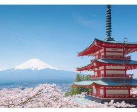 Petit Bateau: 1 aller-retour pour 2 personnes pour Tokyo et 2 places pour le musée du Studio Ghibli à gagner