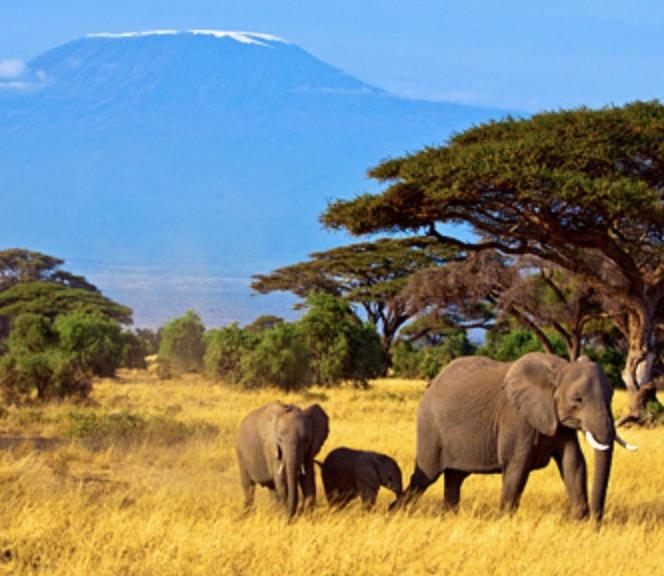 Code promo Parmentine : Un safari photos en Tanzanie pour 2 personnes à gagner