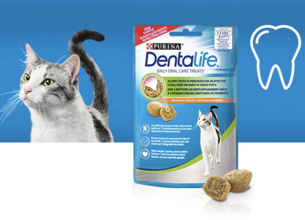 Code promo Conso Animo : 10 000 échantillons de friandises pour Chat Purina Dentalife à tester gratuitement