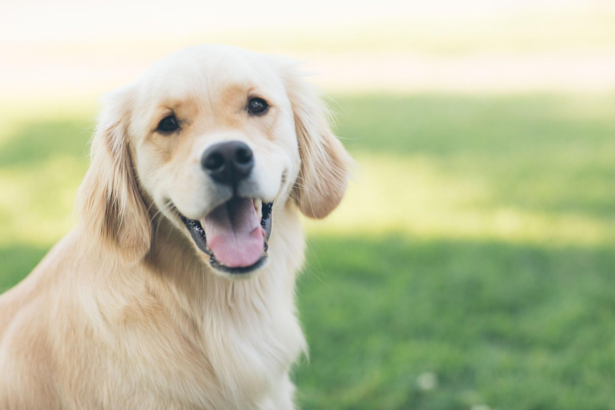 Code promo Kalina Ried : 1 échantillon de croquettes naturelles Kalina pour chien ou chat à commander gratuitement